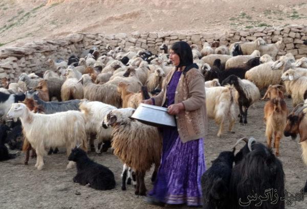 گله بز و گوسفند ، کهگیلویه و بویراحمد  − عکس از سایت امید زاگرس